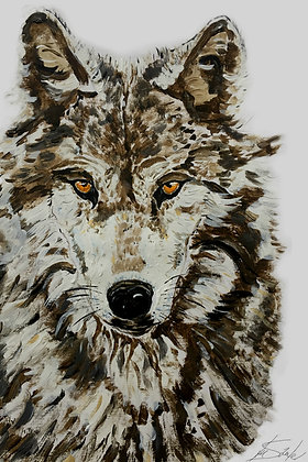 Wolf with amber eyes
