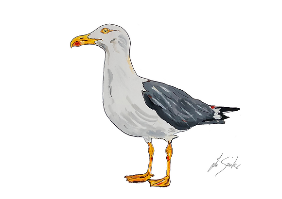 Seagull standing