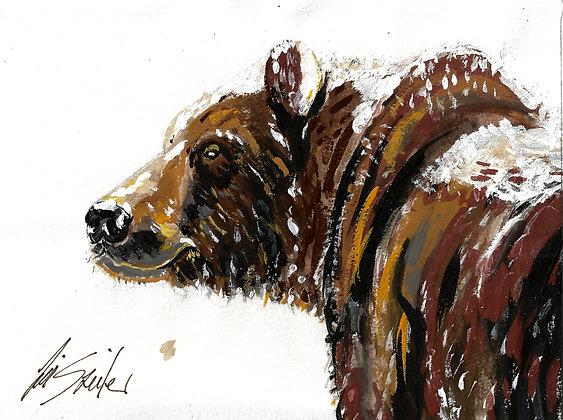 Bear Head in Profile