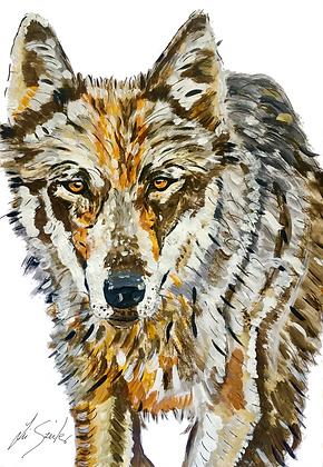 Thin wolf