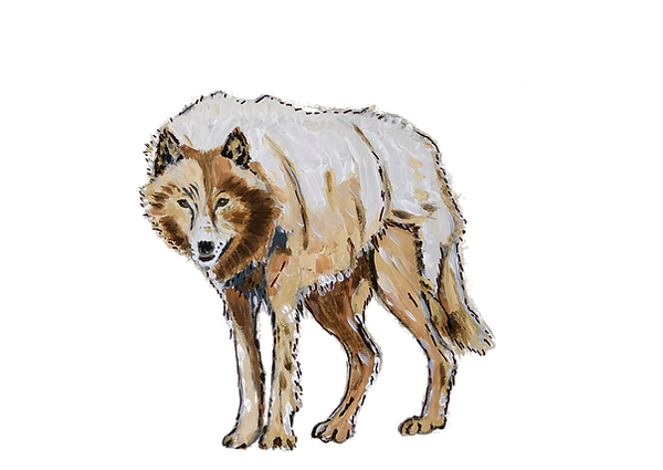 Wolf Sketch.png