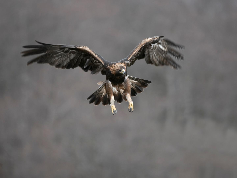 Wildlife_Alladale Wilderness Reserve_gol
