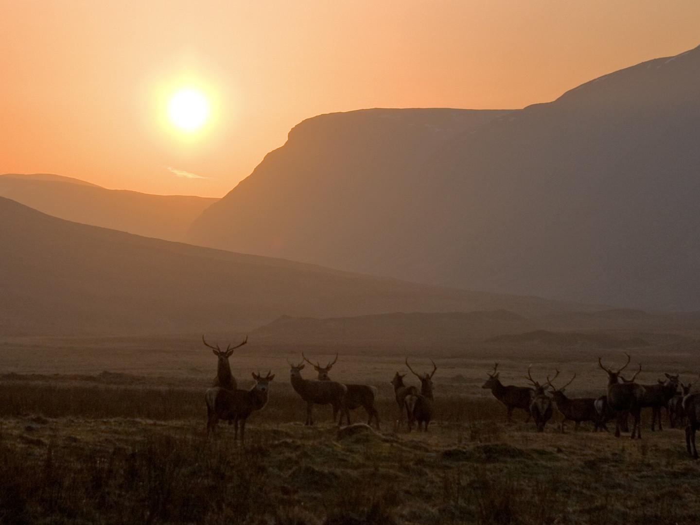 Landscape Alladale Wilderness Reserve_re