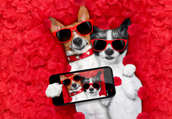 Valentines Couple Of Dogs In Love