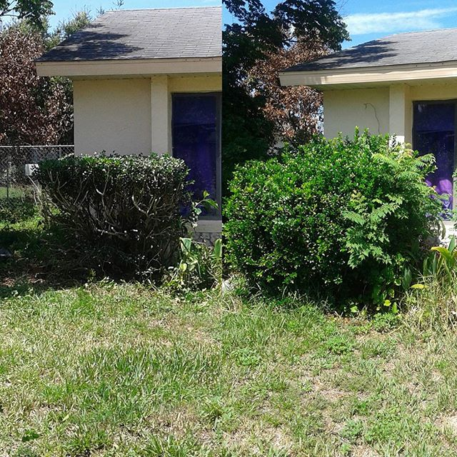 Before and after shot.jpg Residential clean up job
