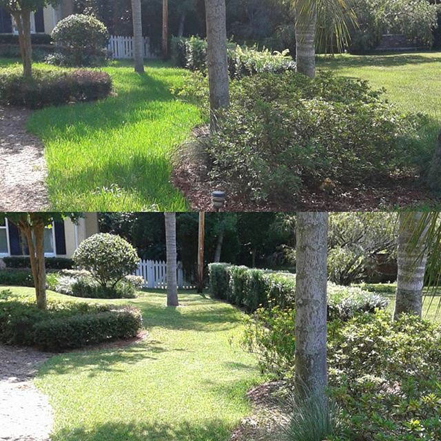 Before and after mowing and bush trimming