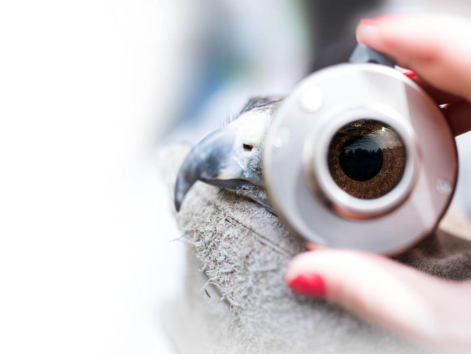 Birds of Prey Eye exam