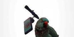 Parrot 6.jpg