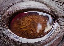 seal eye.jpg