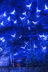 De Blauwe Vogels Maeterlinck Gent nov 16