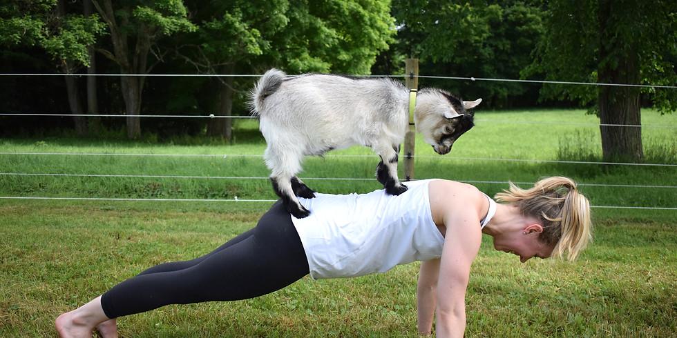 Goat Yoga   8/18 (1)