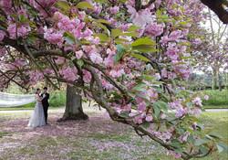 floraison cerisiers Sceaux 2019 1