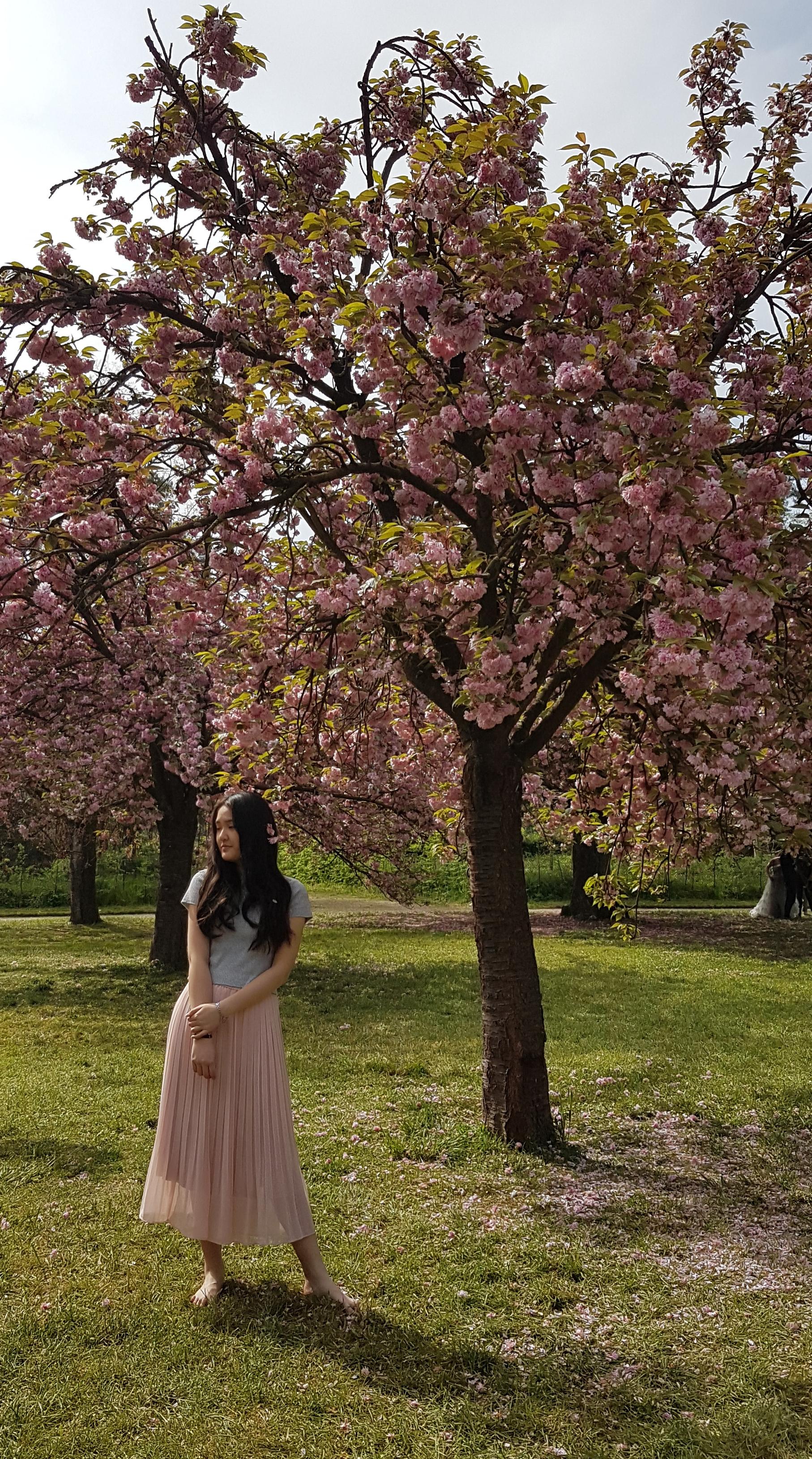 cerisiers Sceaux 2019 2