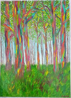 Forêt_d'eucalyptus_arc-en-ciel