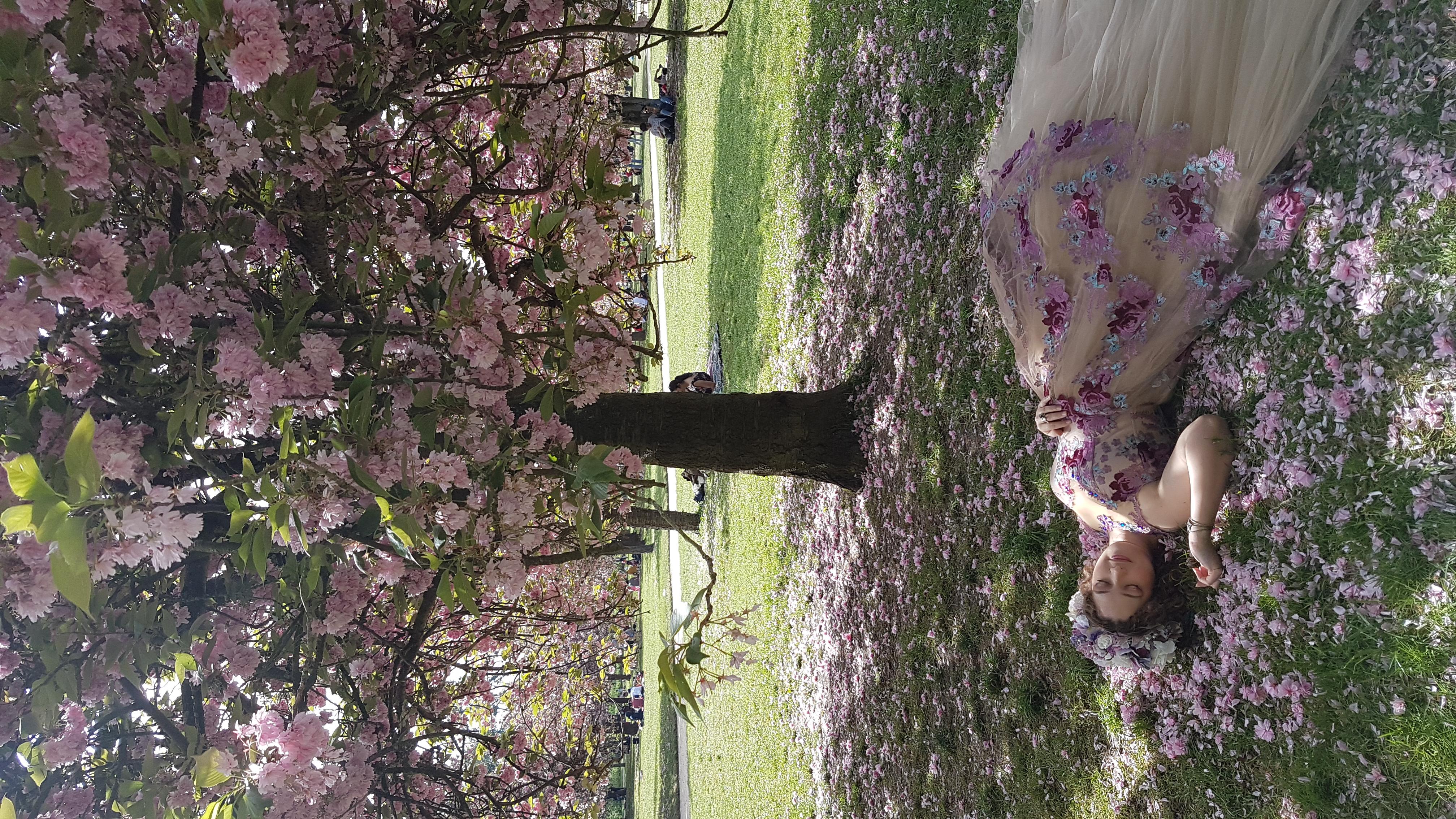 cerisiers Sceaux 2019