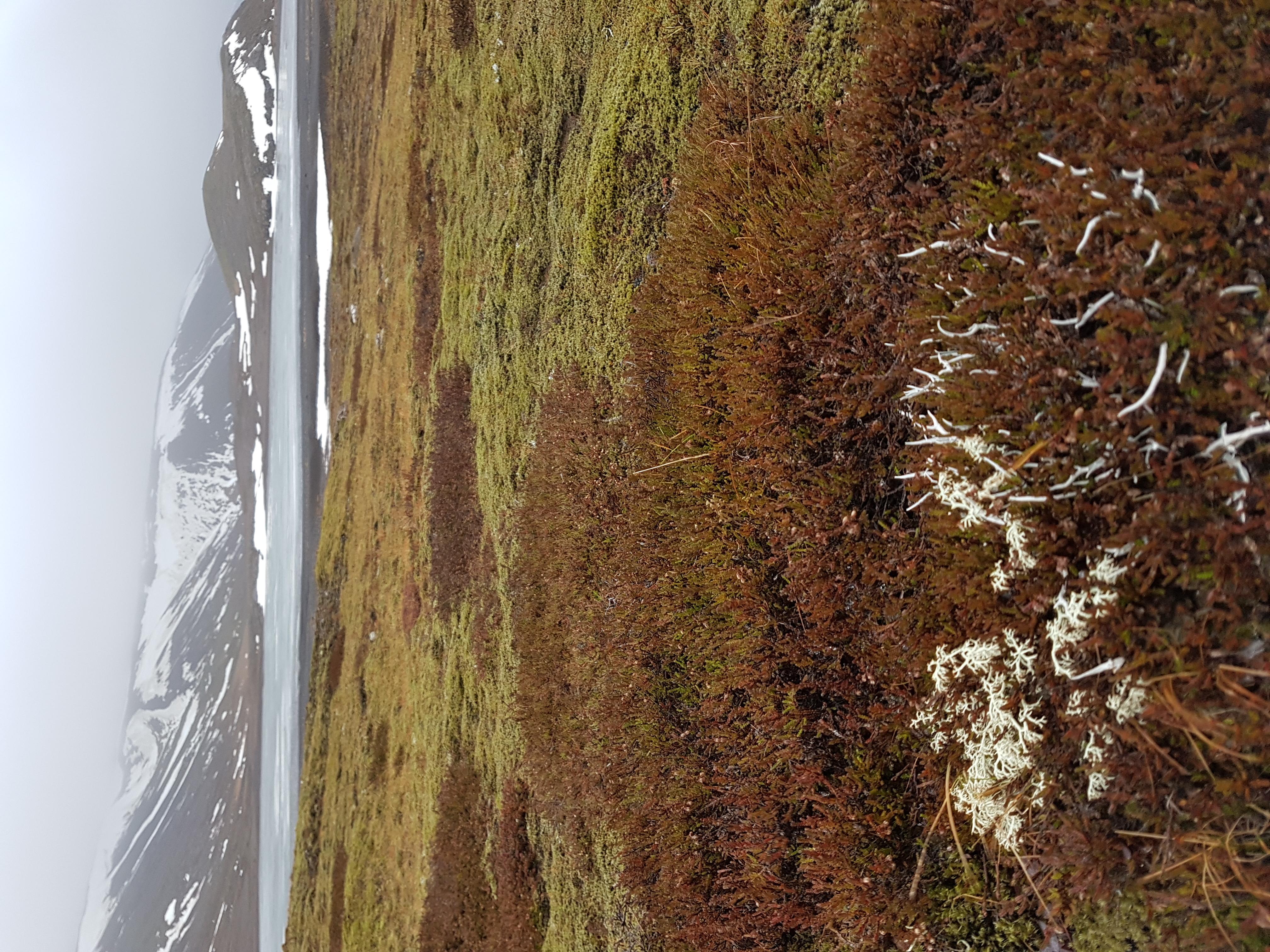 Islande_lac_gelé_2