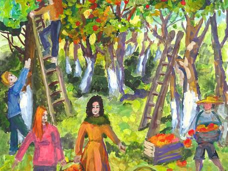«Сбор яблок»