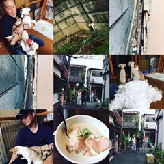 奈良 便利屋 猫捕獲