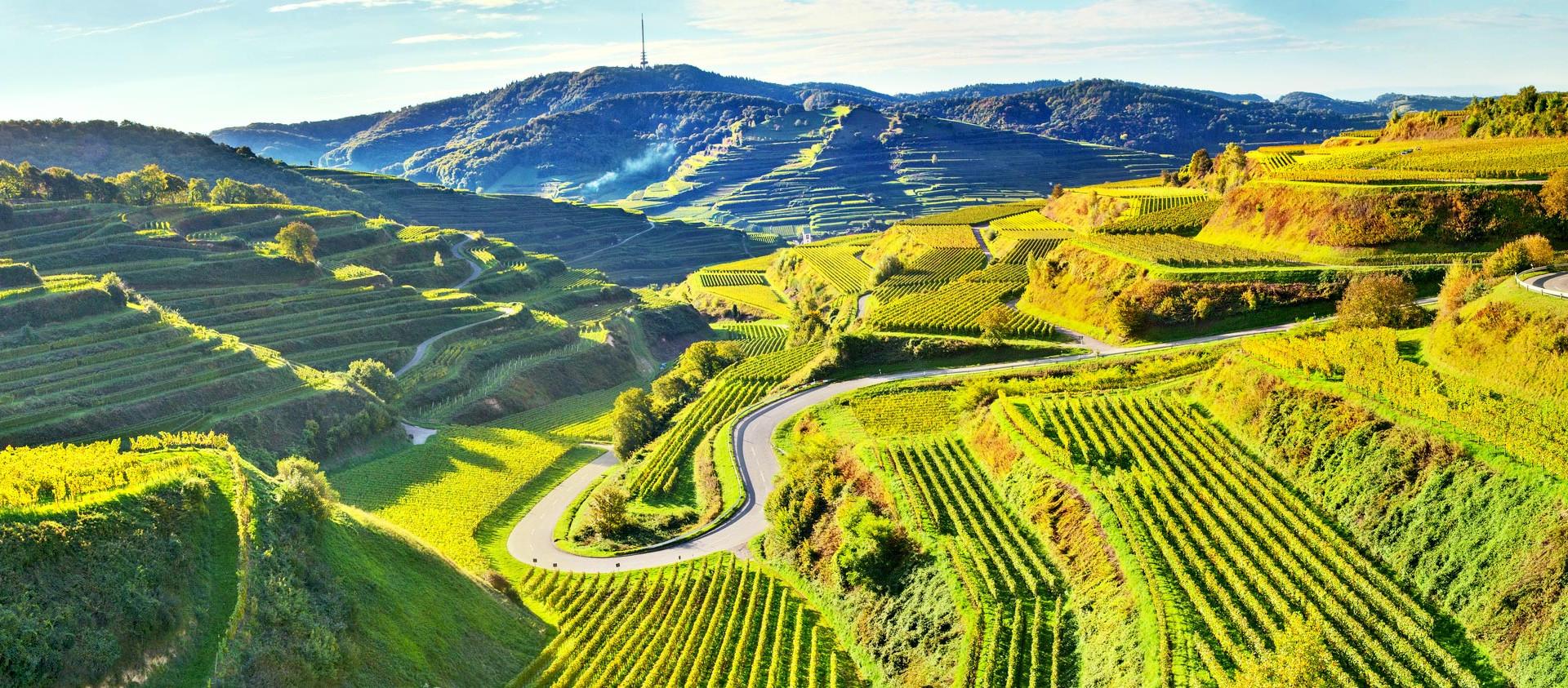 Der Kaiserstuhl mit den besten Weinen in Deutschland