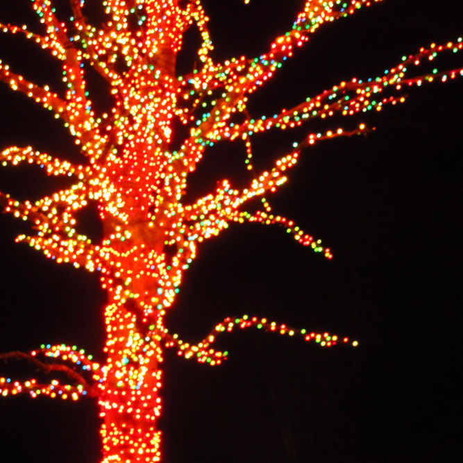 Hollywild Christmas Lights 2020 Home   Hollywild