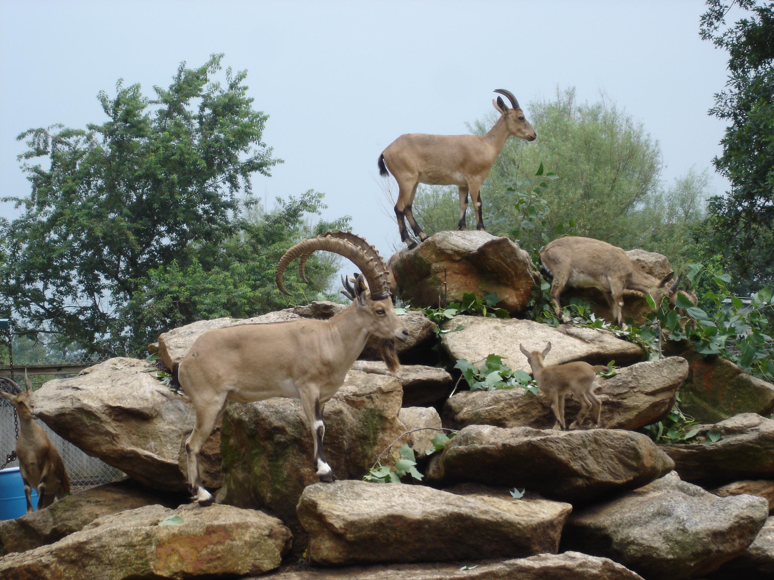 Pics of Turs and Ibex 11-30-10 095