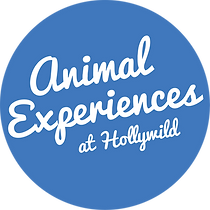 Animal Experiences Logo PMS 2727.png