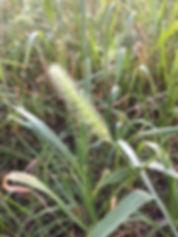 grass close-up.JPG