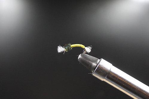 Yellow Standard Thoraxed (Shipman) Buzzer
