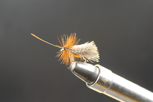 G & H  Sedge (Orange)