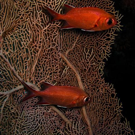 Maldives - Frédy Kocher