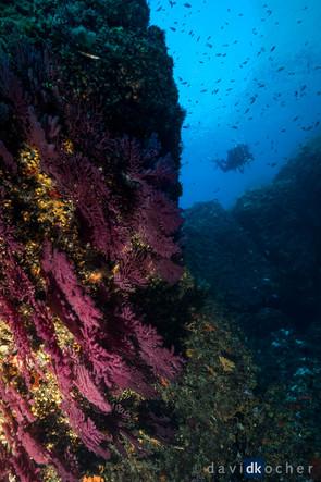 Portofino_145_©_David_Kocher.jpg