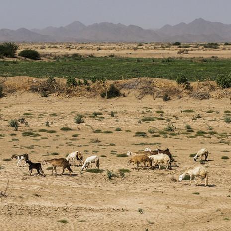 Soudan - Frédy Kocher