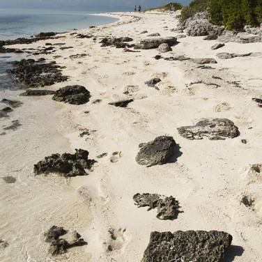 Bahamas - Frédy Kocher