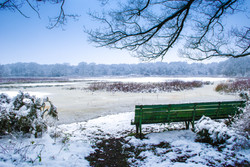 Bright Snow on Brown Moss Bench