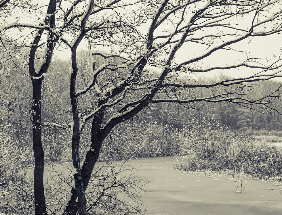 Black and White Snow on Brown Moss
