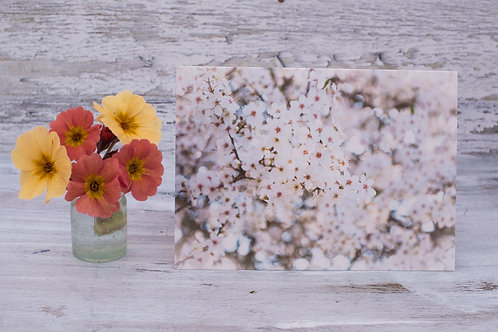 Hawthorn Blossom