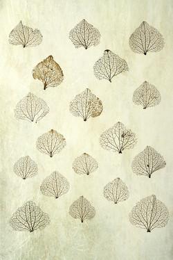 Hydrangea Winter Skeletons