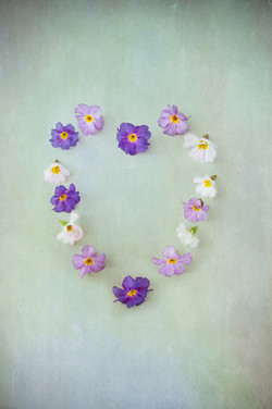 Purple Primrose Heart