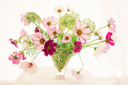 Cosmos and Queen Annes Lace Vase