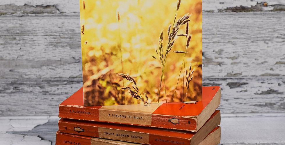 Evening Summer Sunlit Grasses