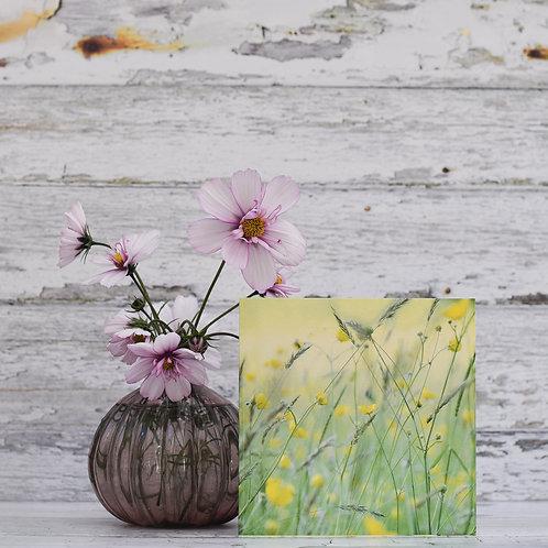 Soft Meadow Buttercups