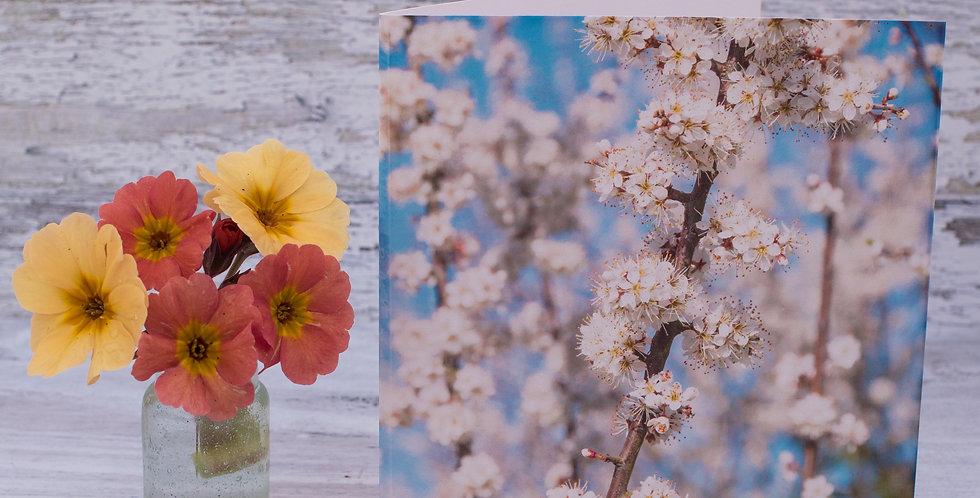 Soft Hawthorn Blossom