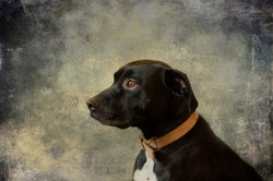 Dougal oil painting