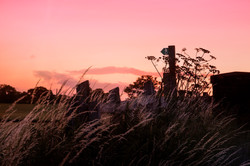 Cheshire Footpath Sunset