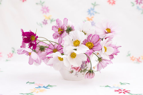 Cosmos Pinks and Whites