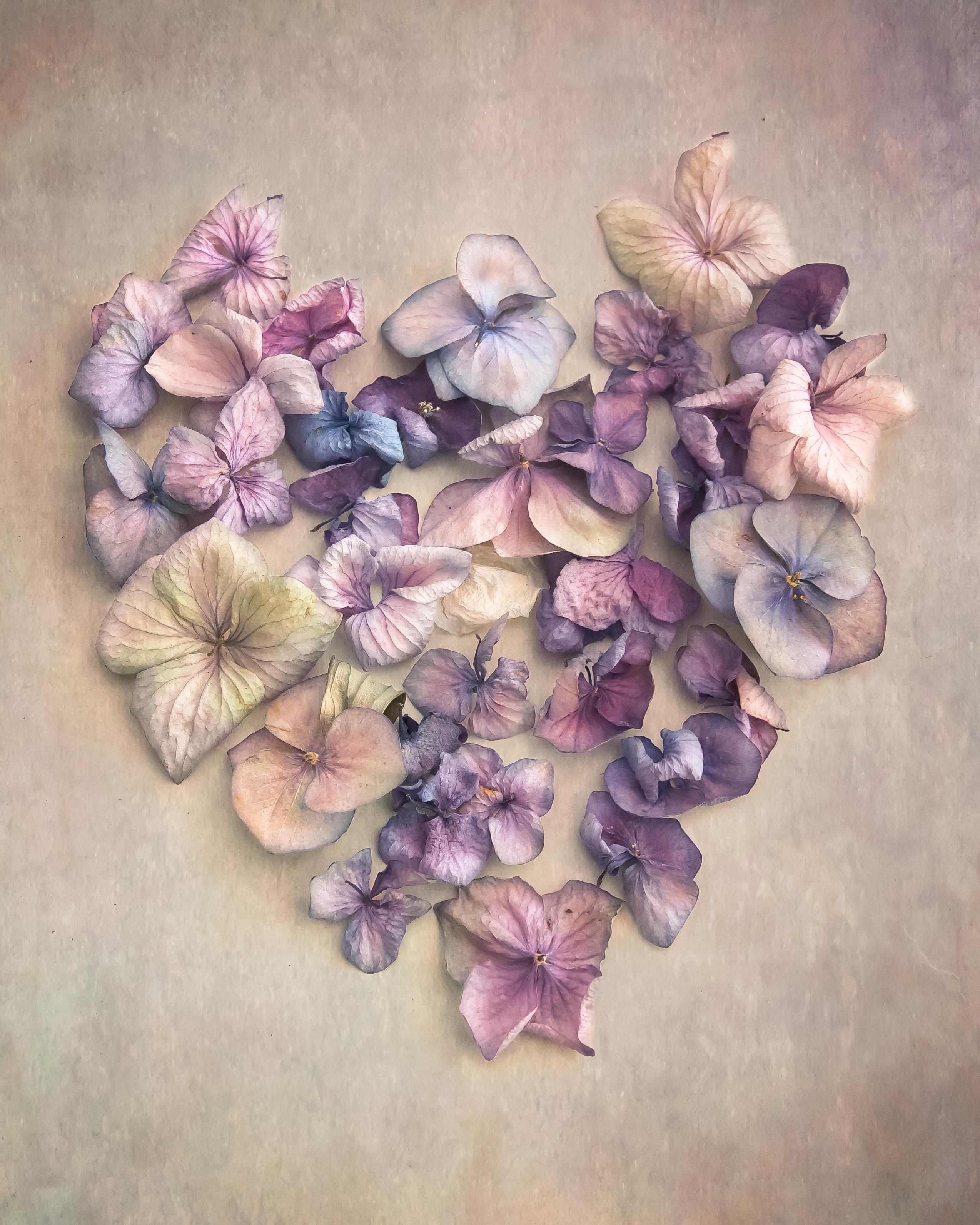 Heart Hydrangea Vintage