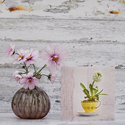 White Primula and Teacup