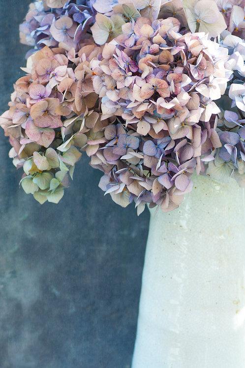 Hydrangea Autumn Blooms
