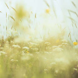 Summer Meadow Abstract