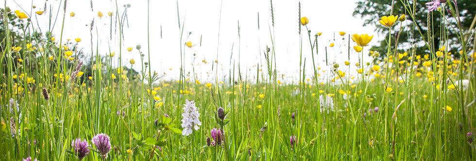 Sunlit Hay Meadow